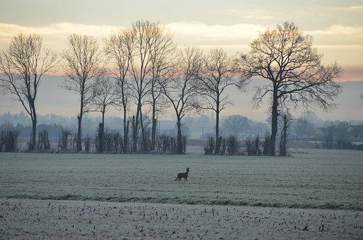 Winter, Morning, Mist, Deer, Trees, Melancholy