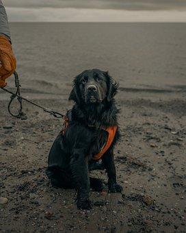 Dog, Leash, Beach, Pet, Black Dog