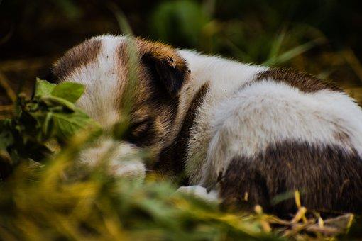 Dog, Puppy, Pet, Grass, Cute, Meadow, Sweet, Nap, Rest