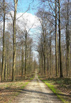 Road, Forest, Trees, Nature
