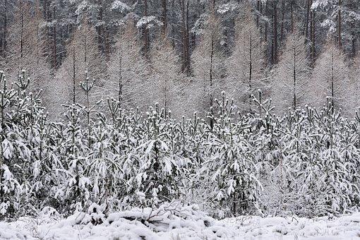 Winter, Snow, Season, Precipitation
