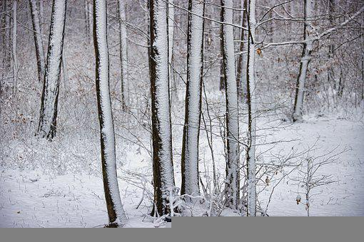 Snow, Sunday, Family, Five, Trees, White, Harmony