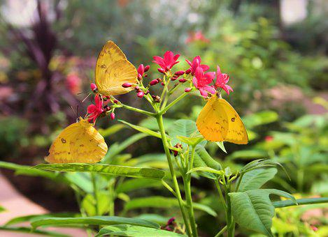 Butterflies, Insects, Flowers