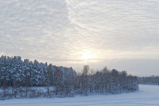 Snow, Trees, Forest, Woods, Woodlands, Hoarfrost, Field
