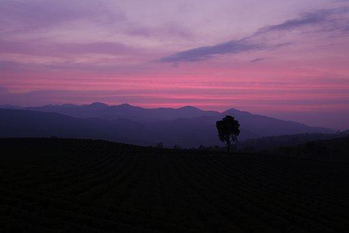 Mountains, Tree, Sunset, Twilight, Dusk, Evening