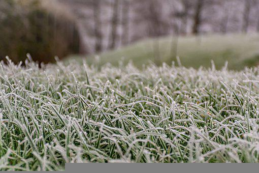 Grass, Field, Frost, Frozen, Ice, Hoarfrost, Cold, Snow