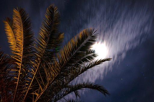 Night, Night Sky, Sky, Stars, Star, Starry Night, Palm