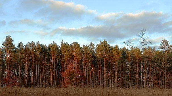 Sunset, Forest Landscape, Light, Forests, Sunlight