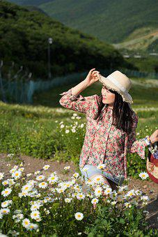 Woman, Flowers, Field, Daisies, Pathway, Hill, Meadow