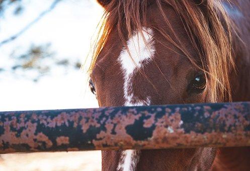 Horse, Animal, Fence, Ranch, Mane, Eyes, Head, Mare