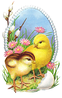 Chickens, Birds, Retro Easter Card, Baby Chicks, Easter