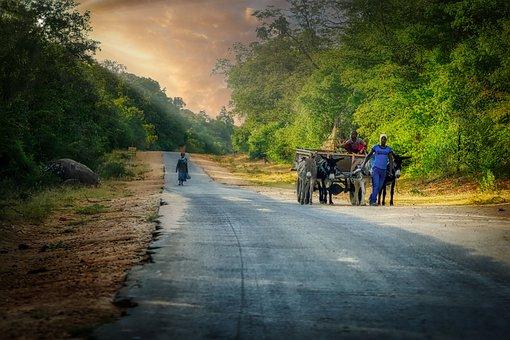 Donkey, Road, Cart, Transport, Woman, Man, Asphalt