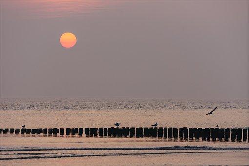 Sunset, Groynes, Sea, Birds, Water Birds, Sea Birds