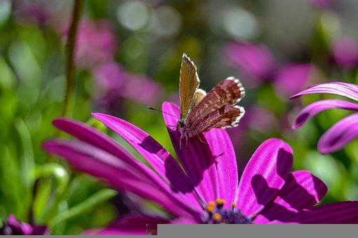Butterfly, Flower, Nature, Insect, Flowers, Animal