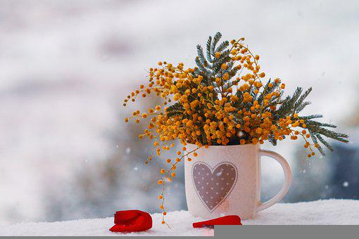 Flowers, Cup, Mug, Snow, Mimosa, Gift, Winter, Cold