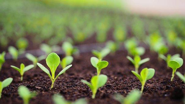 Sprouts, Soil, Farm, Garden, Farming, Gardening, Grow