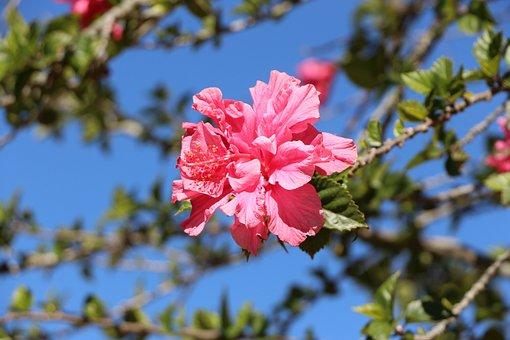 Plants, Flowers, Cucarda, Field, Garden, Petals