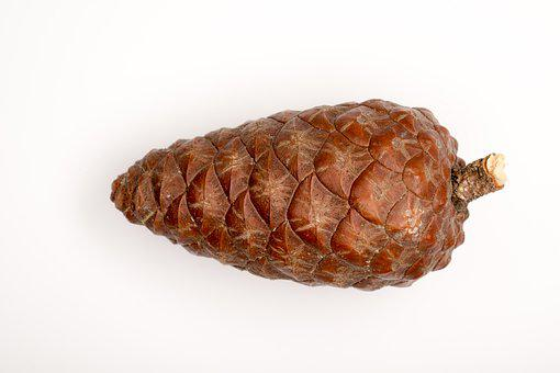 Pine Cone, Macro, Needles, Forest, Cones, Scratchy