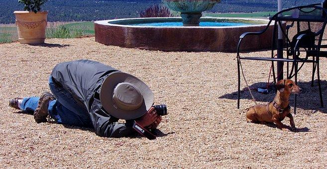 Dachshund, Funny, Tourist, Photographer