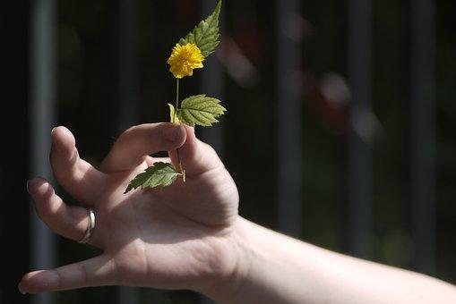 Hand, Flower, Don, Offer, Dandelion, Hippie, Hold, Gift