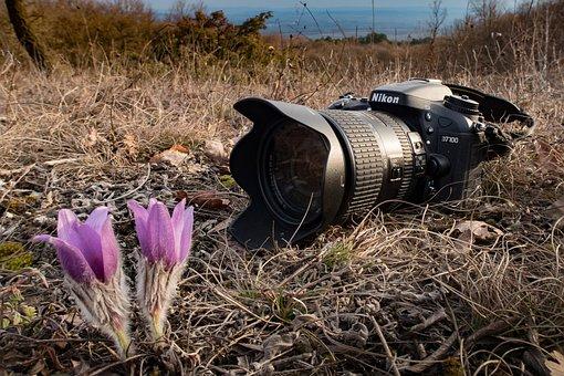 Camera, Nikon, Nature, Photograph, Slr Camera, Flower