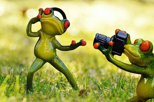 Frog, Photographer, Headphones, Photo Shoot, Photograph