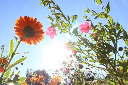 Flowers, Photographed From Below, Gegenlichtaufnahme