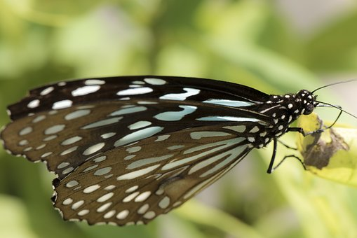 Butterfly, Nature, Insert, Macro, Blue, Pattern