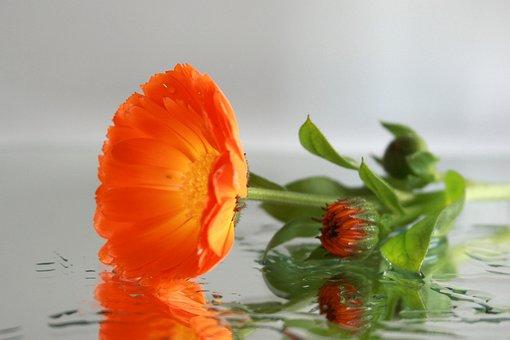 Flower, Mirror, Floral Decode, Water, Close, Wet