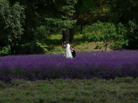 Wedding, Photographer, Lavender, Bed, Flowers, Violet