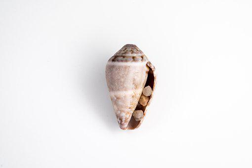 Shell, Sea, Clam, Stones, Pebbles, Sea ​​stones