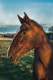 Horse, Sky, Field, Nature, Animal, Outdoors, Farm