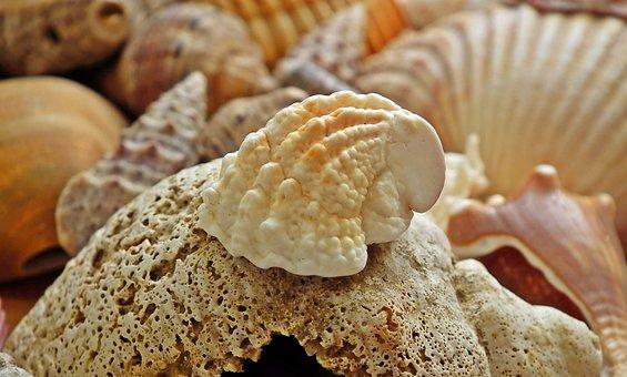 Shells, Sea, Ocean, Seaside, Summer, Holiday, Coast