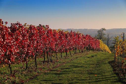 Hageland Vineyard, Hageland, Wine, Vineyard, Trees