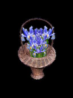 Basket, Flowers, Irises, Transparent, Isolated, Bloom