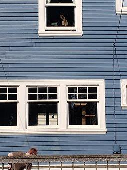 Cat, Window, Gardening