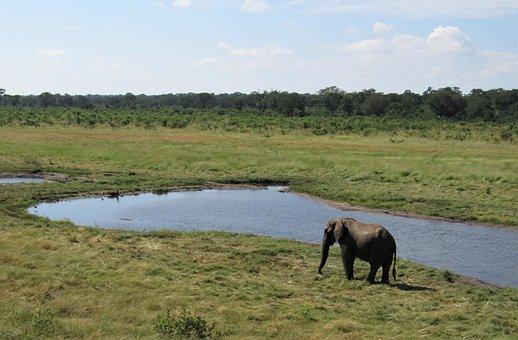 Africa, Landscape, Elephant, Nature, Safari, Waterhole