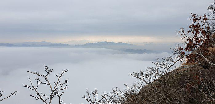 Sea Of Clouds, Mountains, Wolchulsan, Trees, Bare Trees