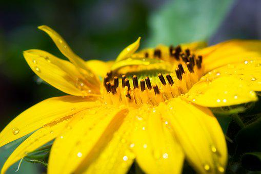 Flower, Close Up, Dewdrops, Water Droplets, Drop