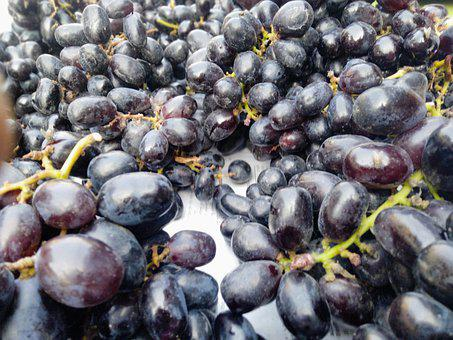 Vine, Wine, Agriculture, Fruit, Grape, Nature, Plant