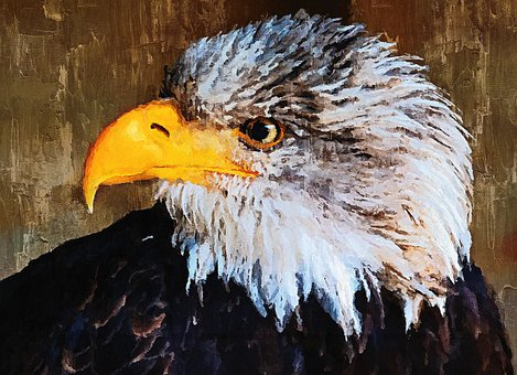 Bald Eagle, Raptor, Bird Of Prey, Head, Portrait