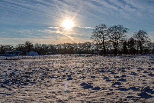 Snow, Field, Trees, Sunlight, Snow Field, Bare Trees