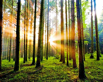Trees, Woods, Sunlight, Forest, Undergrowth, Woodlands