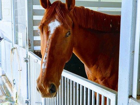 Horse, Head, Stable, Animal, Mammal, Equine
