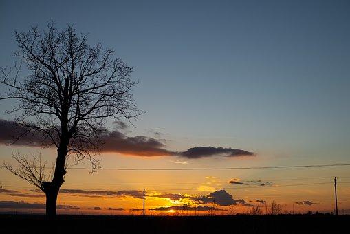 Sunset, Dusk, Tree, Field, Calm, Nature, Lone Tree
