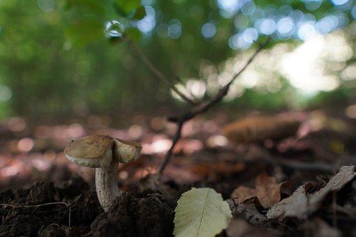 Boletus, Forest, Mushrooms, Nature, Autumn, Edible