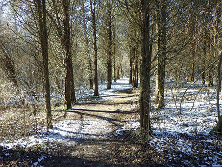 Trail, Trees, Path, Forest, Nature, Hiking, Wood, Woods