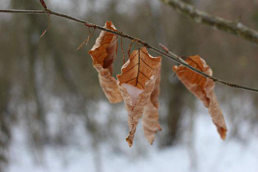 Leaf, Winter, Frost, Leaves, Nature, Cold, Autumn, Tree