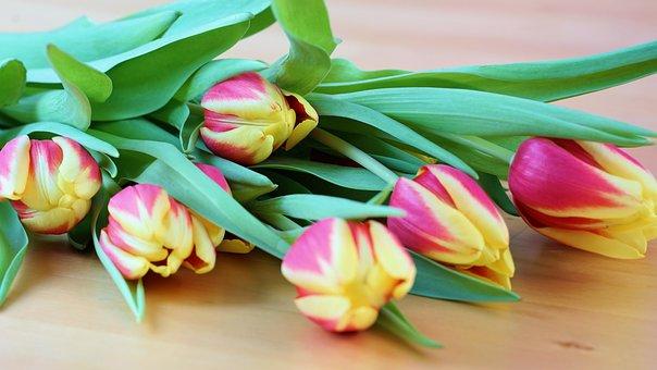 Tulip, Easter, Spring, Flower, Garden, Nature, Blossom