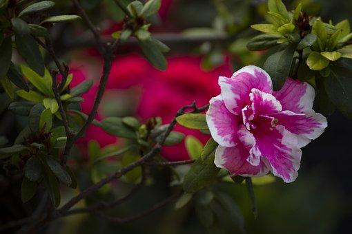 Flower, Garden, Petals, Plant, Nature, Spring, Love